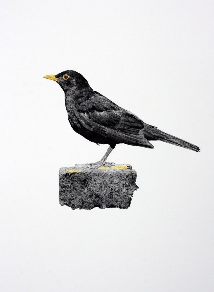 Blackbird, archival print on Hahnemuhle photo rag with hand painted watercolour, edition of 3, 59.5 x 42cm, 2014. Image courtesy the artist and Vane, © the artist