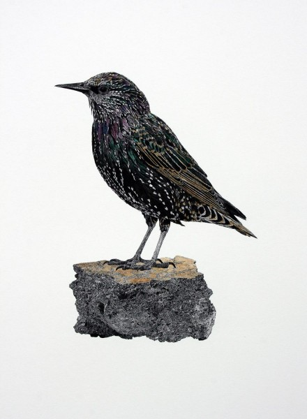 Starling, archival print on Hahnemuhle photo rag with hand painted watercolour, edition of 3, 59.5 x 42cm, 2014. Image courtesy the artist and Vane, © the artist