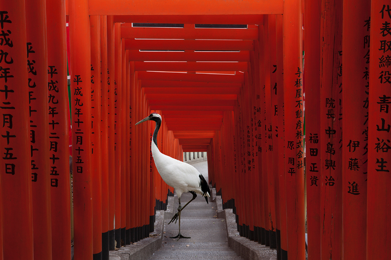 The Journey, Hie Torii, Tokyo, from the 'Monogatari' series, 2015. Image courtesy the artist, © the artist