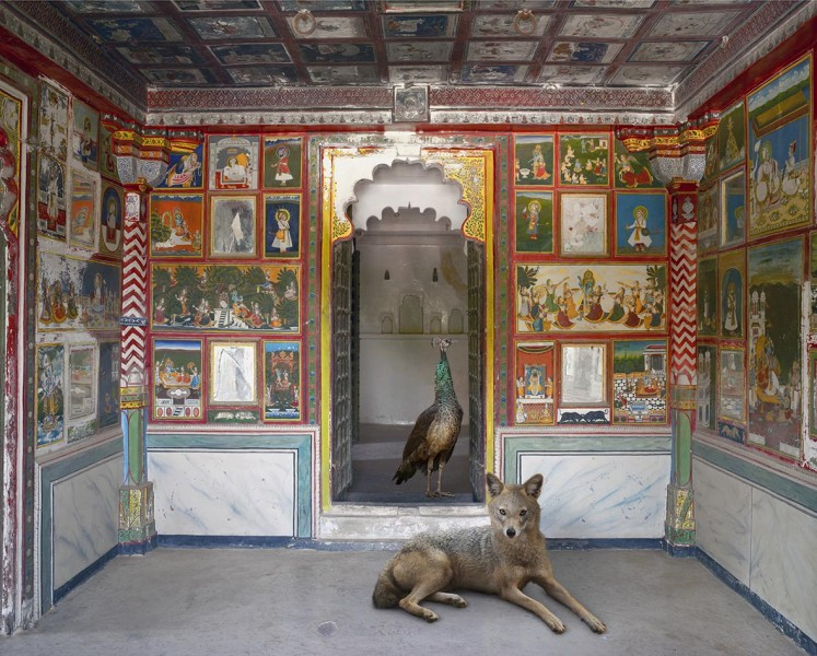 The Lion's Saviour, Zanana, Dungarpur Palace, from the series 'India Song', 2008-2014. Image courtesy the artist, © the artist