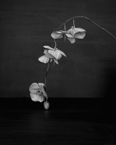 Sarah Jones, Cabinet (XI) (Orchid), framed c-type print from black and white negative, unframed 60 x 48 cm, edition of 5 + 1 AP, 2014. Image courtesy the artist and MAUREEN PALEY, © the artist.