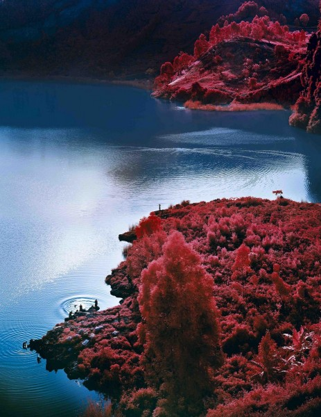 Richard Mosse, Lac Vert, 2012, C-print, 236.2 x 182.9cm, edition of 2 +1AP, courtesy The Vinyl Factory and Edel Assanti, London, © the artist.
