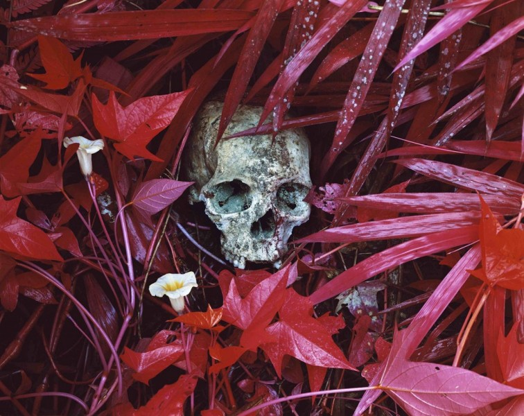 Richard Mosse, Of Lilies and Remains, 2012, C-print, 101.6 x 127cm, courtesy The Vinyl Factory and Edel Assanti, London, © the artist.