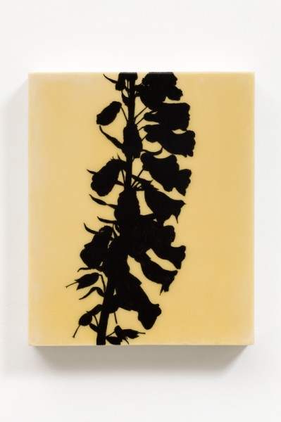 Foxglove Digitalis purpurea, acrylic on lacquer on hand-made gesso panel, 28 x 23cm, 2013, © the artist, photograph Peter Abrahams /Lucid Light