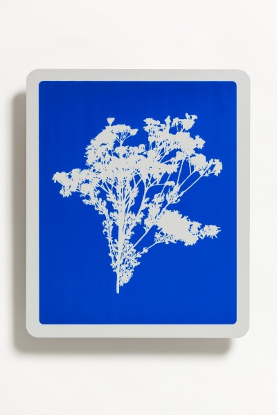 Ragwort Senecio jacobaea, transfer and reflective vinyl on aluminium, 30 x 25cm, 2011, © the artist, photo Peter Abrahams / Lucid Plane
