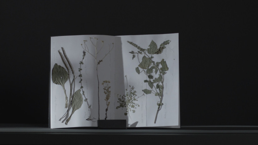 Melanie Manchot, THE GIFT (Conveyor Herbs), 2015. Image courtesy the artist and Bloomberg SPACE, London.