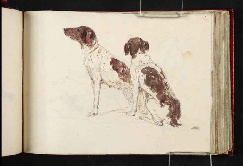JMW Turner, from Lowther Sketchbook [Finberg CXIII], Two Gun Dogs ,1809 © Tate, London 2018