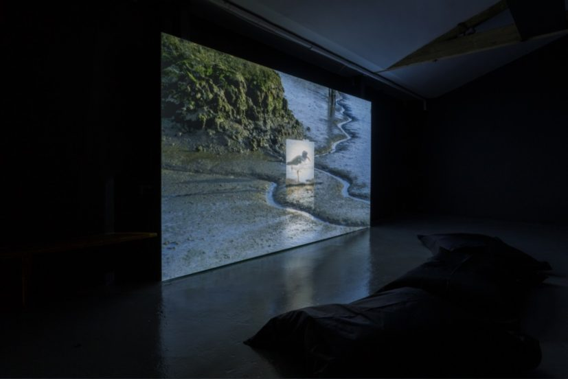 Jake Elwes, CUSP, 2019 (installation view) at the Zabludowicz Collection. Photo Tim Bowditch.