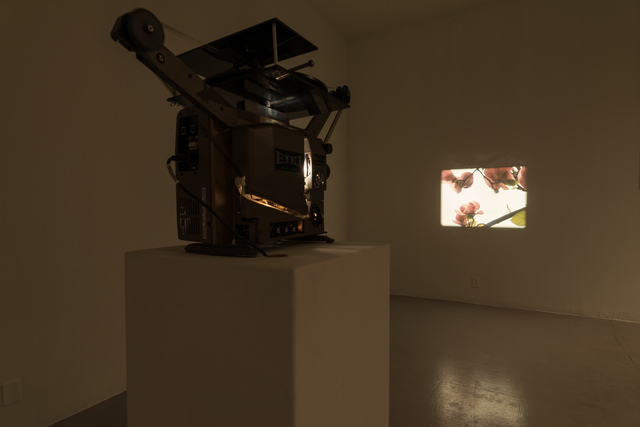 Installation view of 'Our Magnolia', 2009.
